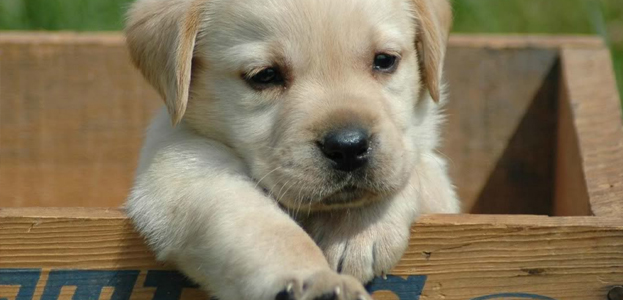 Puppy Shyness–How To Change Your Puppy's Timid Behavior