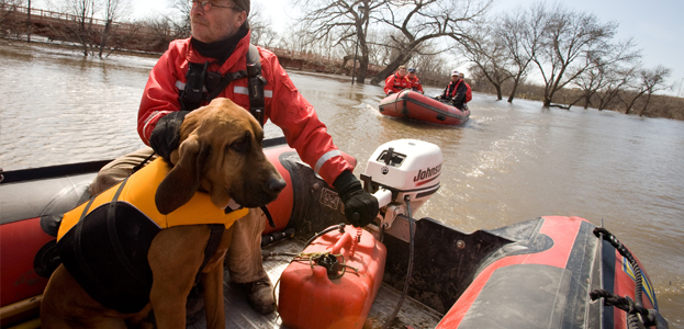 Search and Rescue Dogs – How are they Trained?
