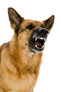 how to stop a dog barking for attention