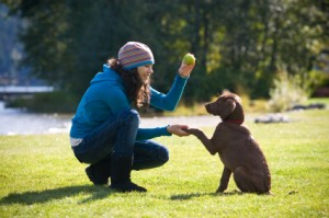 Learn Dog Training