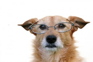 Teach old dogs new tricks